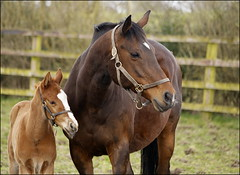 (catb -) Tags: ireland horse stud kildare
