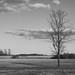 Trädet/The tree