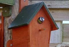 in residence (green gennii) Tags: garden nest box jersey bluetit
