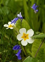 Spring 2016 - 855 LBG (Lostash) Tags: life flowers plants nature gardens spring flora seasons leicesterbotanicalgardens
