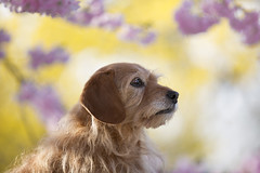 hello spring (genofever) Tags: light dog cute love dogs nature animal canon puppy spring cutie hund springtime