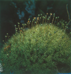Specs of life (The Stugots) Tags: park plant flower color macro green film nature up project lens polaroid sx70 moss pittsburgh close bokeh hills micro penn instant week 121 lichen impossible roid roidweek