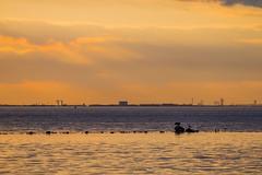 Dusk (Infomastern) Tags: sunset sea water malm vatten hav solnedgng sibbarp