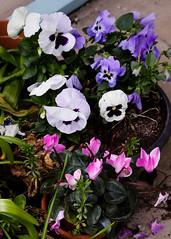 20160424-5D3_9471 (Terry Payman) Tags: garden jeannette