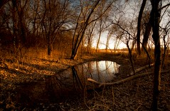 Dusk (Nutzy402) Tags: trees winter sunlight nature water leaves reflections outdoors evening nikon nebraska dusk warmth natureconservancy