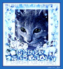Megumi is Wishing a Happy New Year 2016 to Everyone! (martian cat) Tags: christmas pet macro cat cards kitty newyears inspirational merrychristmas caption allrightsreserved happynewyear russianblue motivational feliznavidad megumi kittycat buonnatale motivationalposter glcklichesneuesjahr felizaonuevo bonneanne joyeuxnol kurisumasuomedeto buonanno allrightsreserved  martiancatinjapan allrightsreserved   martiancatinjapan martiancatinjapan frhlichiwiehnacht omedettogozaimasu allrightsreserved martiancatinjapan captioncollection