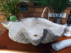 Grey Giant Clam Shell SINK 14 (LittleGems AR) Tags: ocean sea sculpture sun beach home statue giant bathroom shower aquarium soap sand bath sink natural contemporary unique decorative shell craft style toilet towel clam basin special shampoo taps wash ornament gift seashell pearl nautical reef decor spa luxury opulent fossils oneoff clamshell mollusks cloakroom bespoke tridacna sculpt crafted gigas facetowel