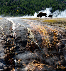FIRE & BRIMSTONE - Grand Prismatic Spring (laura's POV) Tags: travel usa west nature river outdoors fire nationalpark buffalo hole wildlife hell wanderlust adventure explore yellowstonenationalpark yellowstone wyoming bison hotspring magical geothermal wildwest mothernature wander thegreatoutdoors mustsee grandprismaticspring destinations firebrimstone lauraspointofview lauraspov