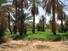 IMG_4194 (motazabdelazeem   ) Tags: sudan rivernile     northernsudan    alkarafab