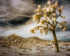 Joshua View - Textured Color IR (byron bauer) Tags: sky painterly texture clouds digital sand rocks desert joshua palm infrared yucca topaz byronbauer