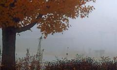 Morning Fog (BlueRidgeKitties) Tags: fog maple northcarolina acer westernnorthcarolina canonpowershotsx40hs