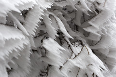 _MG_1057 (schamrock77) Tags: winter italy mountain ice freezing natura inverno montagna friuli ghiaccio galaverna canon6d 35f2is