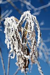 Eisblte - ice blossom (victorlaszlo73) Tags: winter ice sunny eis sonnig mecklenburgvorpommern biestow