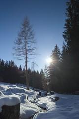 Melting dreams (Toukensmash) Tags: winter mountain snow tree austria melting sony dreams styria alpha58