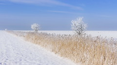 Dieser Weg ... (Don Bello Photography) Tags: schnee winter panorama landscape frost himmel landschaft nordsee bume raureif orton schilf 1000views norddeutschland niedersachsen 2016 northerngermany 2000views acdsee 3000views dnenhof 4000views 100favorites schilfgras 50favorites 200favorites 150favorites lumixphotographer donbello panasonicphotographer cuxhavenberensch reinhardbellmann panasonicfz1000 lumixfz1000 donbellophotography acdseeultimate9