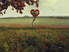Heart (iblushay : Thank you for visiting and the faves) Tags: flowers flower field landscape heart outdoor deception valentine flowerbed illusion deviantart poppyfield