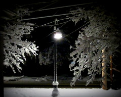Streetlight in Snow 02.05.16 (rowland-w) Tags: winter snow tree night dark streetlight glow kennebunk wintry