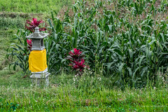 20150913155327.jpg (Marisa y Angel) Tags: bali ricefields paddyfields 2015 jatiluwih camposarroz