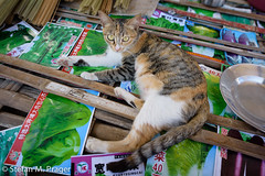 719-Mya-HSIPAW-018.jpg (stefan m. prager) Tags: cat burma myanmar katze shan birma gemüse hsipaw thibaw nikond810