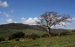 Rami al vento (Sara Stampa) Tags: winter tree nature alberi trekking wind walk natura albero inverno prato paesaggio vento lazio camminare quercia pascoli pascolo montidellatolfa