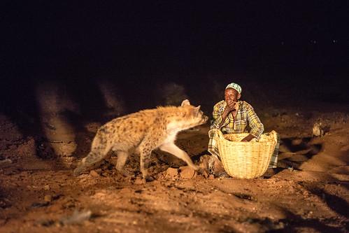 hyena-08