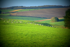 Landscape (terry@sevensixty images) Tags: landscape countryside sheep country fields oxfordshire lomoish