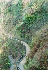 Shanklin Chine (Andy Latt) Tags: green nature sony isleofwight gorge shanklinchine shanklin chine andylatt rx100m3 dsc01106r