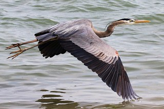GBH Inflight Wing in Water