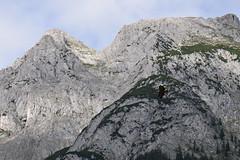 Eagle over Alps (quinet) Tags: mountains alps castle austria tirol österreich eagle adler berge schloss château tyrol hohenwerfen autriche burg falconry falknerei montagnes 2014 aigle tyrolia fauconnerie