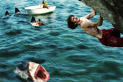 N09-the shark