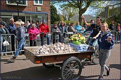 Flowerbulb parade 2016 (Lisse) (Dutch Simba) Tags: holland nederland corso netherland bloemen bollen lisse flowerbulbs
