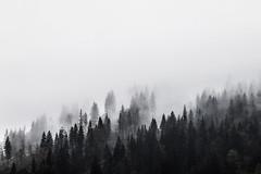 foggy woods (spikeROCK) Tags: nature canon exploring slovensko orava slovakia priroda slovak juro 70d kupculak