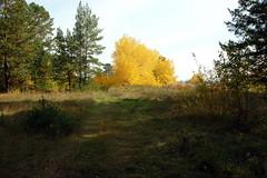 DSC_6014 (Rustam Bikbov) Tags: autumn september 2012    sverdlovskoblast