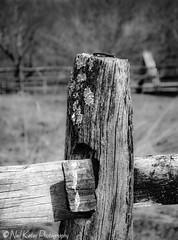 Lichen on a fence post_DSC5766 photoshop NIK edit  (nkatesphotography) Tags: nature landscape outdoors scenic nikon1855mm nikond7000