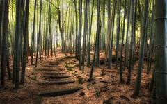 Fort de bambous, Kyoto (Bmartel2k) Tags: japan forest kyoto path bamboo japon sentier bambou