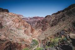 Looking Back (markf5020) Tags: arizona cactus usa beautiful river landscape outdoors nikon colorado desert boots hiking path grandcanyon dream grand bluesky canyon hike trail d610 1835mm markf5020