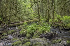 Tod Creek, Brentwood Bay, BC (Freshairphotography) Tags: trees creek forest moss spring rainforest rocks vancouverisland greens brentwoodbay rocksandwater gowlandtoddpark mossytrees saanichpeninsula gowllandtodpark todcreek explorebc explorevancouverisland