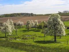 Blossoming Spring (enneafive) Tags: flowers light shadow sky sun sunlight white color green nature field clouds fence landscape spring belgium belgique belgie blossoms meadow orchard limburg birdview fruittrees borgloon hesbania cloudsofsnow