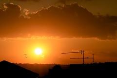 head for the sun (peet-astn) Tags: autumn sunset cloud sun birds clouds southafrica tramonto sole nebbia