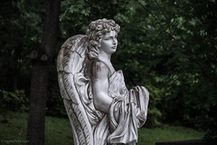 Rainy Day at Glenwood (enigmaarts) Tags: graveyard rain statue angel tomb tombstone houston 2016 glenwoodcemetery enigmaartsphotography enigmaartscom beckyplexco