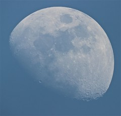 Blue sky Moon [Explored] (Sarah and Simon Fisher) Tags: uk blue sky moon canon afternoon craters telescope astrophotography astronomy daytime worcestershire lunar gibbous waxing maksutov bromsgrove primefocus 600d 127mm moonwatch lunarseas