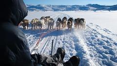 Mush mush (Lil [Kristen Elsby]) Tags: arctic greenland editorial musher dogsledding arcticcircle sleddogs dogsled travelphotography greenlandic ilulissat jakobshavn westgreenland vestgronland canong12 greenlandicdog