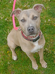 Romeo_04 (AbbyB.) Tags: rescue dog pet newjersey canine shelter adopt shelterpet petphotography easthanovernj mtpleasantanimalshelter