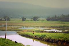 Sylhet | Bangladesh (qrstanvir) Tags: water wonderful landscape 50mm scenery paradise hills sylhet bangladesh vilage prime50