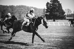 home stretch (Jen MacNeill) Tags: horse race md maryland jockey races thoroughbred equine fairhill