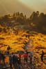 Golden touch (elenaleong) Tags: nepal sunrise himalayas 3200m goldengrass poonhilll nepaljomsomtrekking