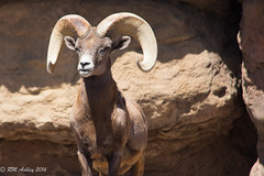 IMG_2988.jpg (ashleyrm) Tags: travel arizona museum sonora desert tucson tucsonarizona