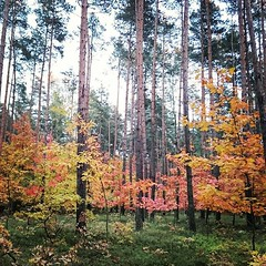 Autumn.. (c)2015_t.t.a.b. - #forest #trip #silent... (Tomski TTABOGRAPHY) Tags: trip autumn orange green colors yellow forest silent wendy ano tomski ttab treemagic uploaded:by=flickstagram instagram:photo=11009035240190796871484642177 klobuckcounty tomskijr ttabography anoprojekt panatommedia