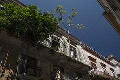 Kuba Havanna Bausubstanz Baum erorbert Balkon (Ruggero Rdiger) Tags: cuba havanna kuba lahabana 2016 besichtigung citystadt rdigerherbst