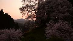 46Butsuryuji Temple (anglo10) Tags: sunset japan cherry temple